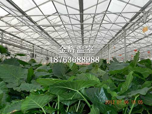园艺温室大棚4