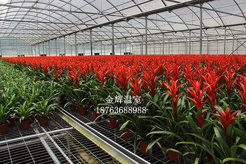 园艺温室大棚5